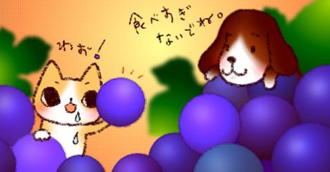wannyan200709